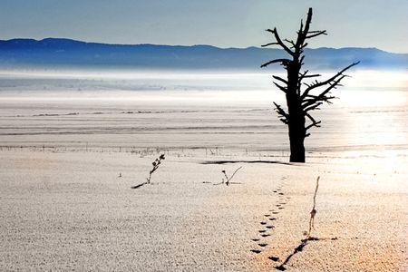 Lone tree 3-web