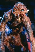 The fly_1